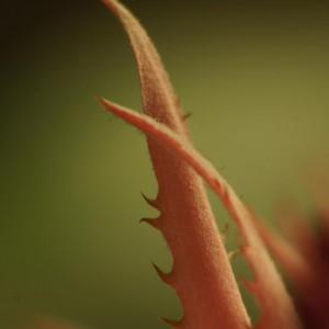 Detail Ananasblüte