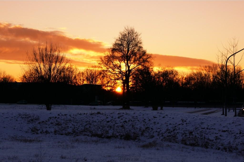 Sonnenuntergang hinter ein paar Baeumen im nahe gelegenen Park