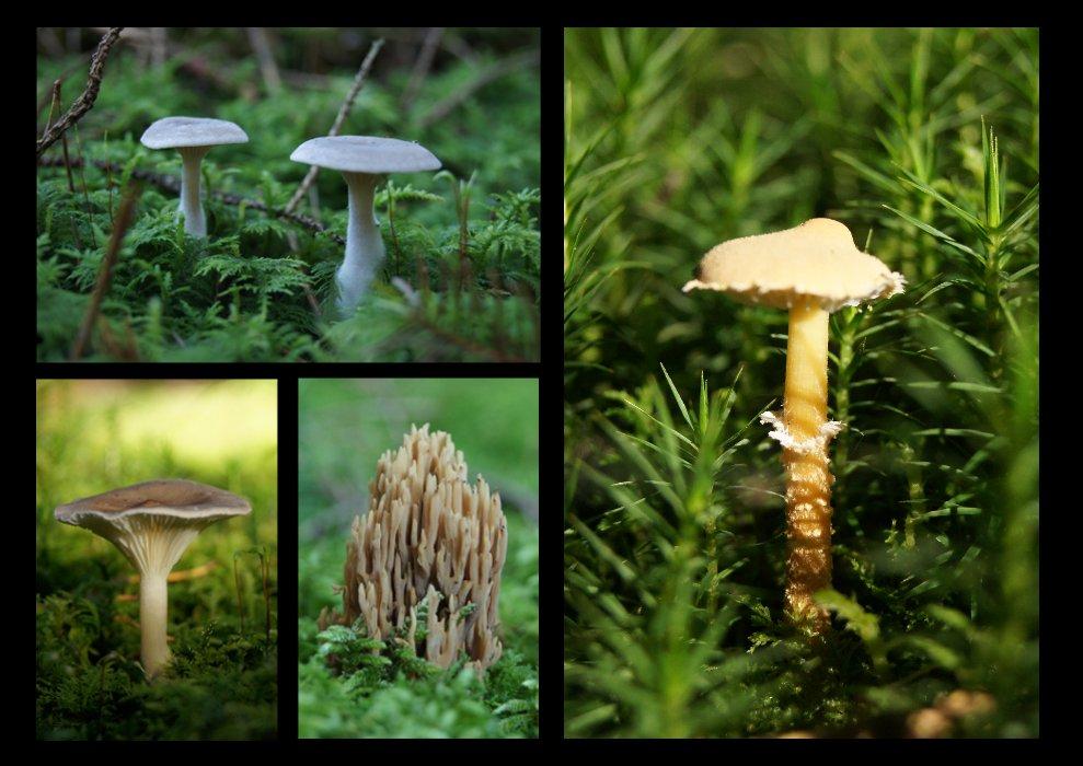 verschiedene kleine Pilze