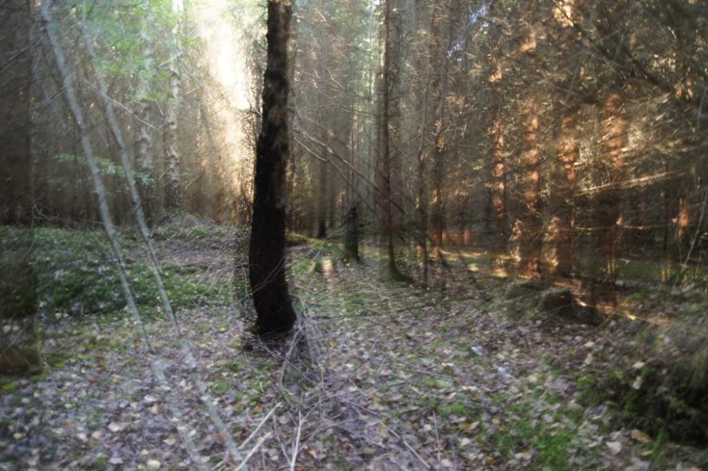 Reißzoom Experiment im Wald